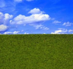 Reality in Scale Groomed Grass