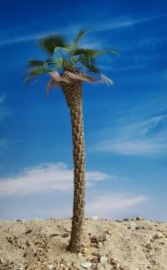 Reality in Scale Desert Fan Palm - contains resin trunk, scatter, wire, instructions and 18