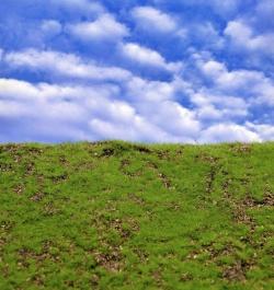 Reality in Scale Wild Grass Type 1 XXL